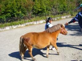 pony02