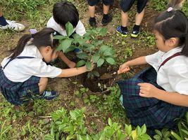 小学校 記念植樹(30.7)2