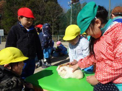 第一幼 移動動物園①(30.3)