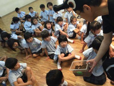 大山田幼 かぶと虫授業(30.6)2