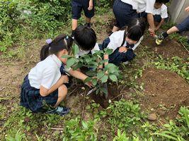 小学校 記念植樹(30.7)3