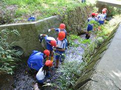 小学校 水辺環境調査(30.10)1
