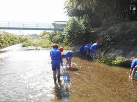 小学校 水辺の調査(30.10)3