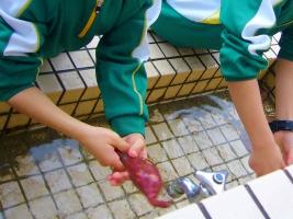 小学校 焼き芋(30.12)1