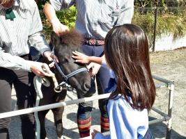 pony02(11.1)